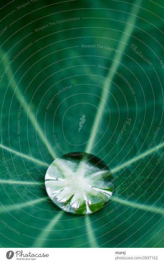 Frischekick für die neue Woche. Reiner Wassertropfen auf grünem Blatt Flüssigkeit Stärke nass rein klein glänzend leuchten elegant belebend ästhetisch