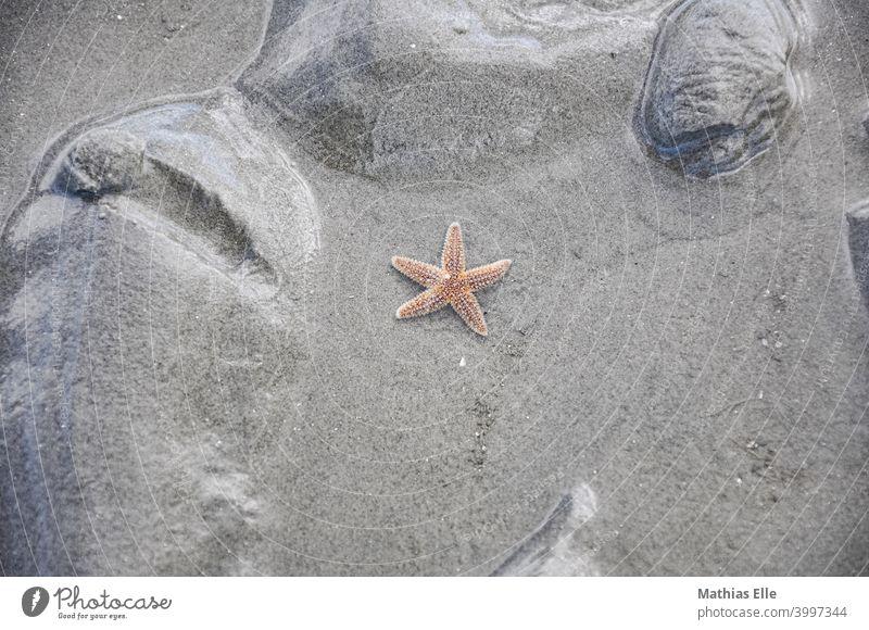 Roter Seestern im Sand Menschenleer mehrfarbig Außenaufnahme Sommer Ferien & Urlaub & Reisen Sandstrand maritim Urlaubsfoto abstrakt menschenleer