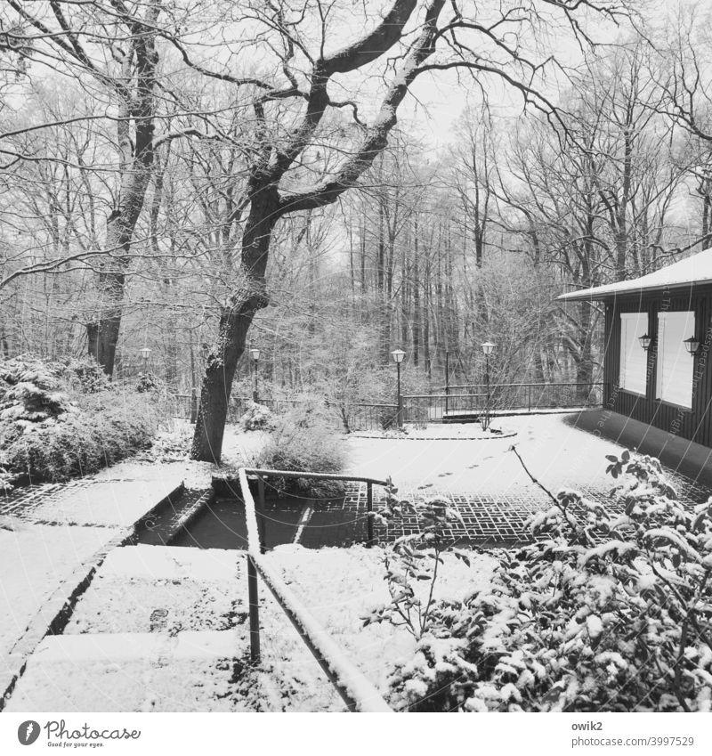 Winterbetrieb Wald Schnee Weg Bäume Waldweg Menschenleer Baum Holz Wege & Pfade Landschaft Außenaufnahme Natur frostig kühl kalt verschneit natürlich friedlich