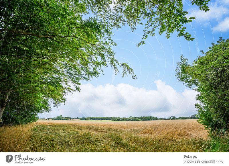 Ländliche Landschaft mit frischen Strohfeldern ruhig Dänemark Laubwerk Skandinavien Wetter farbenfroh Ökologie Ackerbau Ernte Heu Grasland Wolkenlandschaft