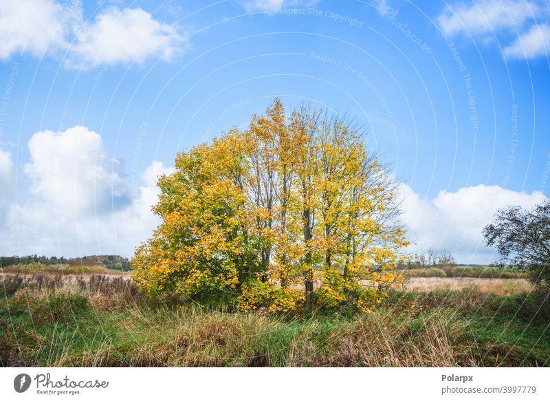 Bunte Herbstlandschaft mit Bäumen Stroh pulsierend Landschaft Weide Garten Szene Wiese niemand Ahorn Blatt saisonbedingt malerisch Oktober Sonnenlicht Feld