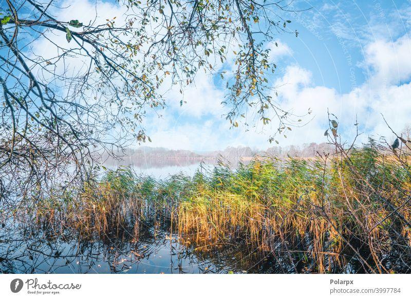 Idyllische Seelandschaft im Herbst hell fallen Blatt Sauberkeit üppig (Wuchs) Szene Spiegel Wolken Wildnis grün wild friedlich Landschaft Sonnenschein Tag