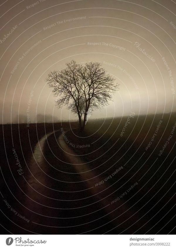 Nachtaufnahme. Baum am Wegesrand. Wege & Pfade Straße Acker Nebelschleier Nebelstimmung Nebelbank dunkel Nachthimmel düster Menschenleer Natur Landschaft