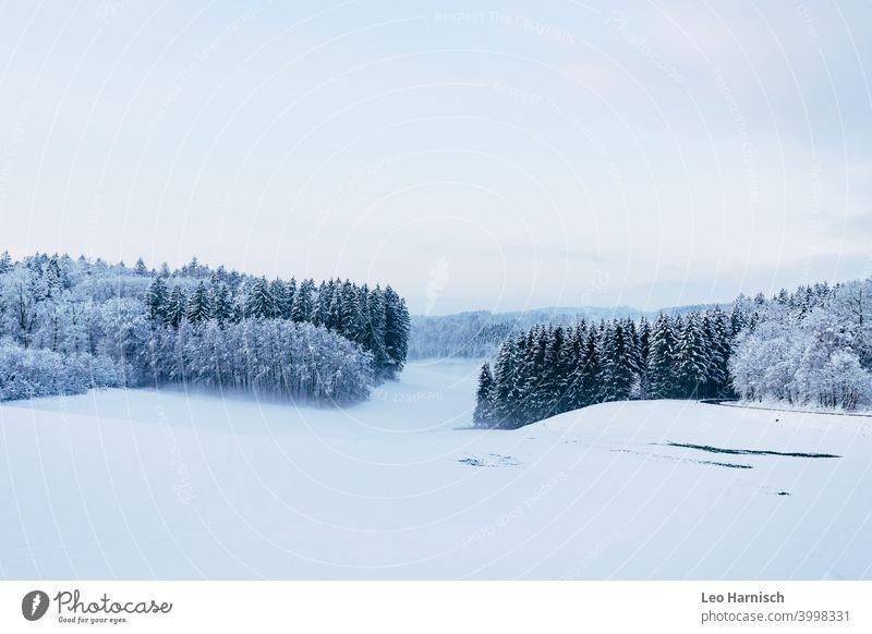 Winterwald Wald Bäume Schnee Menschenleer Landschaft Außenaufnahme kalt weiß Baum Wintertag Frost Winterstimmung Umwelt Tag Wetter Schneedecke frieren Eis Klima