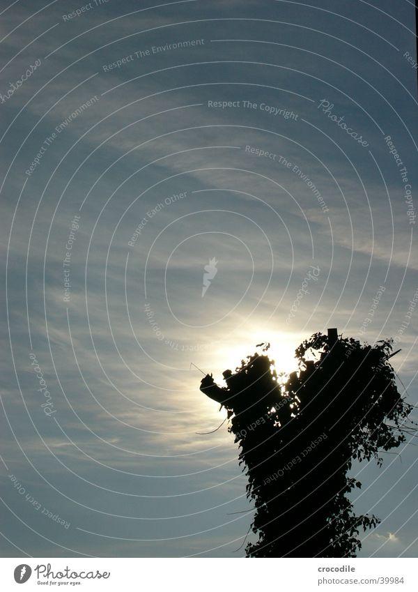 Hidden Sun Himmel Baum Sonne blau Wolken dunkel hell bewachsen