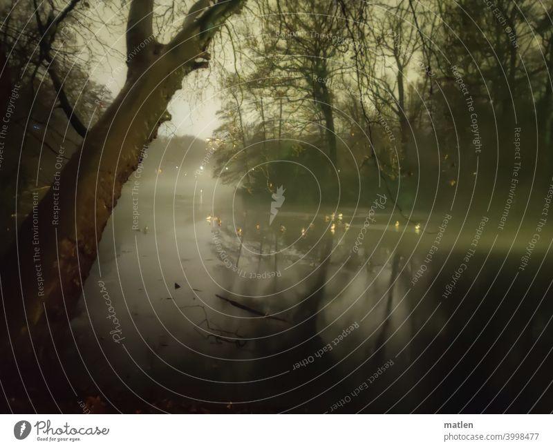 Enten uebernachten auf dem letzten Eis Tiergarten Berlin Park See Nacht Dunkelheit Eis Voegel Schlafen Nebel Menschenleer Baum Außenaufnahme