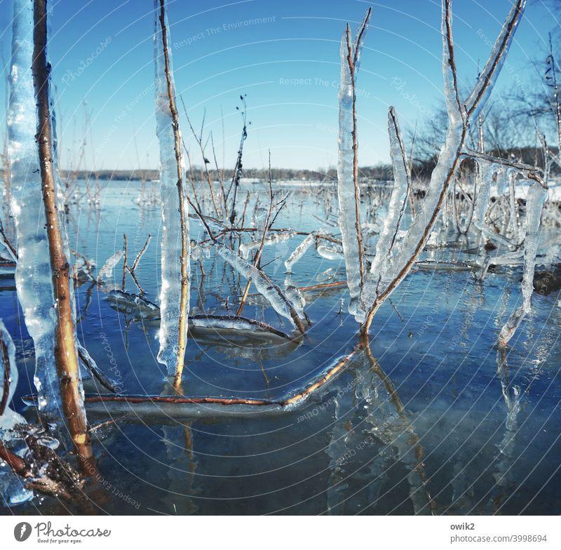 Am gläsernen Meer Pflanze Wildpflanze Frost Eis gefroren nah kalt Zweig Umwelt Winter Farbfoto Eiskristall Strukturen & Formen Detailaufnahme Außenaufnahme
