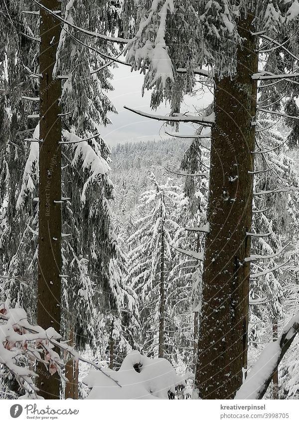 im Schnee Schneebedeckte Gipfel Schneefall Schneelandschaft Schneedecke schneebedeckt Natur Winter Außenaufnahme Landschaft Berge u. Gebirge kalt Menschenleer