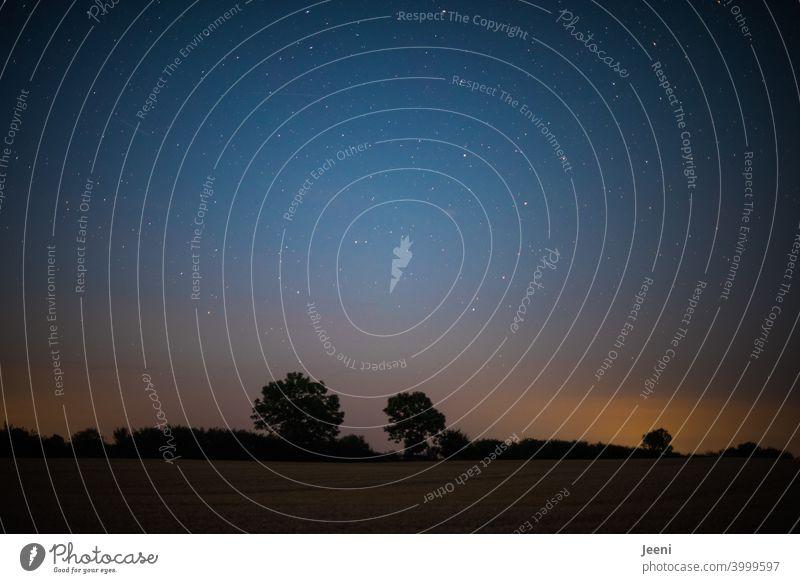 Nachthimmel mit Sternen und leuchtendem Horizont | dunkle Umrisse der Bäume am Horizont Himmel Sternenhimmel Licht sternenklar Weltall Unendlichkeit