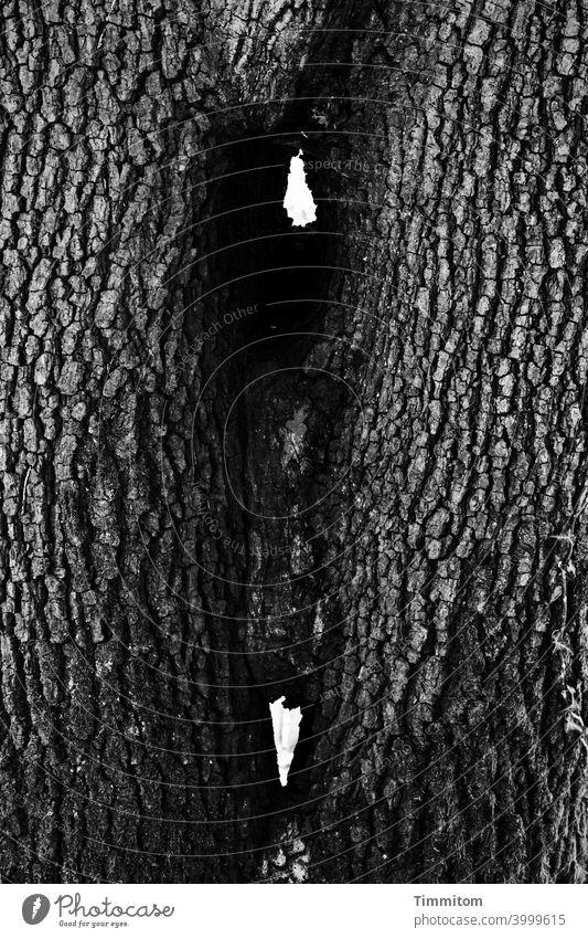 Zwei Bäume, ganz eng verbunden Baum Baumstamm Rinde zusammenwachsen Natur Holz Schwarzweißfoto Durchblick