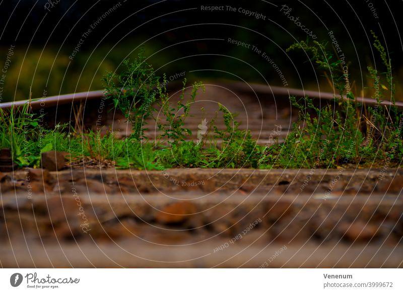 Alte Bahngleise, die in Deutschland nicht mehr genutzt werden, Wildpflanzen im Gleisbett Schienen Eisenbahn bügeln Rust Eisenbahnschwellen Wald Wälder Baum