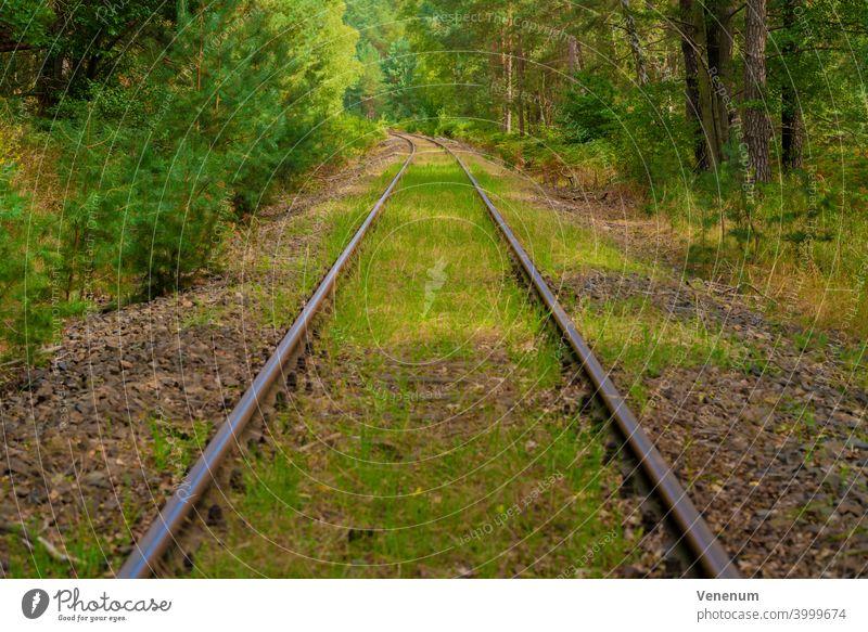 Alte Eisenbahnschienen, die in Deutschland nicht mehr benutzt werden,Bäume neben den Eisenbahnschienen,Wildgras im Gleisbett Bahn Schienen bügeln Rust