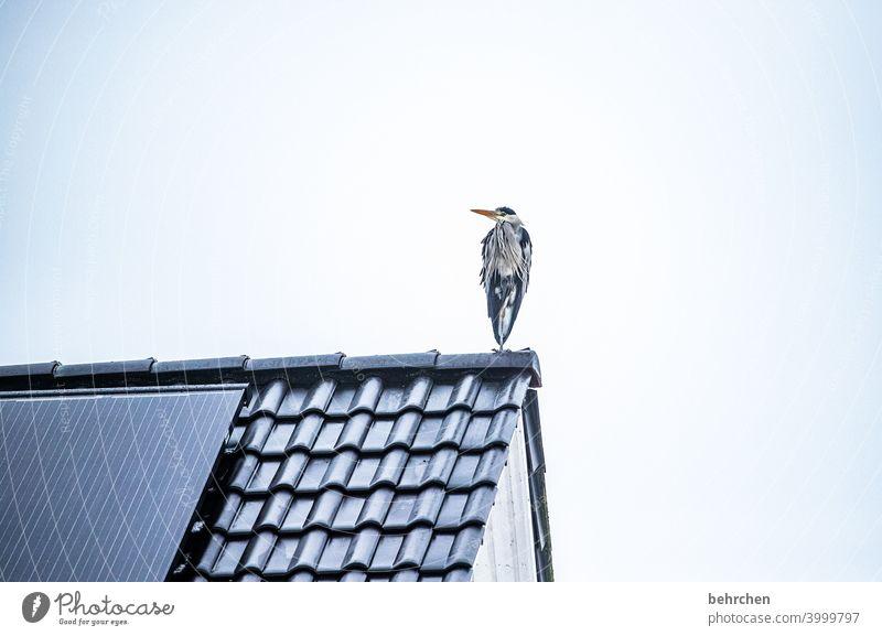 ein männlein steht... Flügel witzig Schnabel Himmel oben Umwelt grau Farbfoto Tier Außenaufnahme Natur Tierporträt hübsch Fischreiher Federn Vogel auf der Lauer