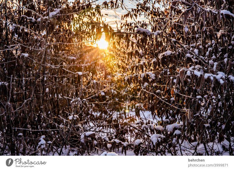 winterlicht Jahreszeiten Winter Herbst Wald Gegenlicht Licht Zweige u. Äste Garten Wiese Sonnenaufgang Sonnenlicht Natur Äste und Zweige Klima traumhaft schön