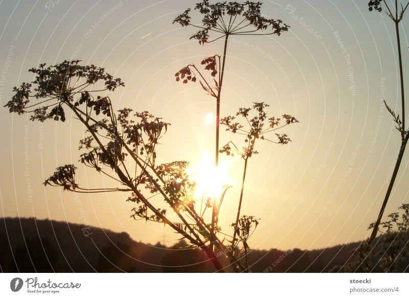 Sonne in Kleineutersdorf 2 Natur Sonnenuntergang