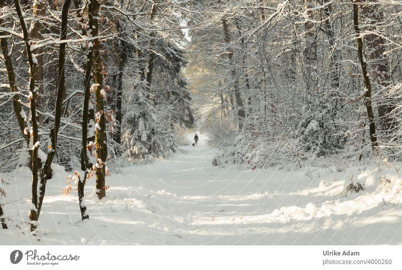 Spaziergang mit Hund im winterlichen Märchenwald Osterholz-Scharmbeck Garlstedter Wald Schneelandschaft Winter Bäume Frost Winterstimmung Winterwonderland weiß