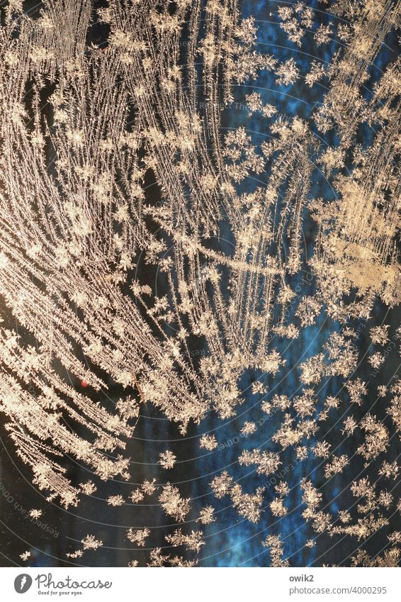 Sternschnuppen Eis Eisblumen Glas Farbfoto kalt Frost bizarr Menschenleer Winter Nahaufnahme Detailaufnahme Außenaufnahme Eiskristall leuchten glänzend