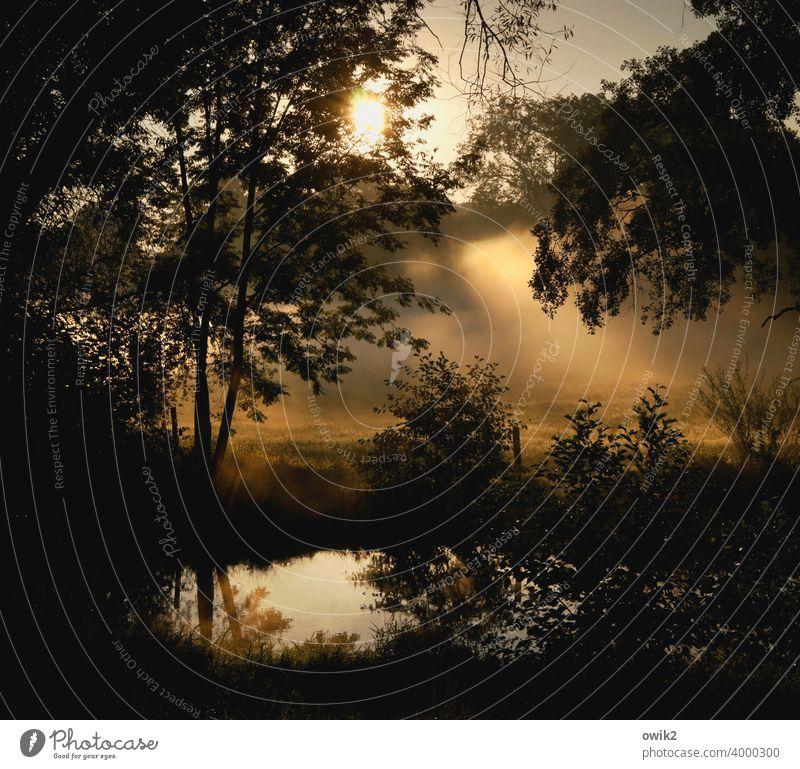 Nebulös mystische Landschaft Wasserspiegelung Reflektion Ewigkeit Stimmung Wald gigantisch Unendlichkeit Himmel Gras Detailaufnahme Dämmerung geheimnisvoll