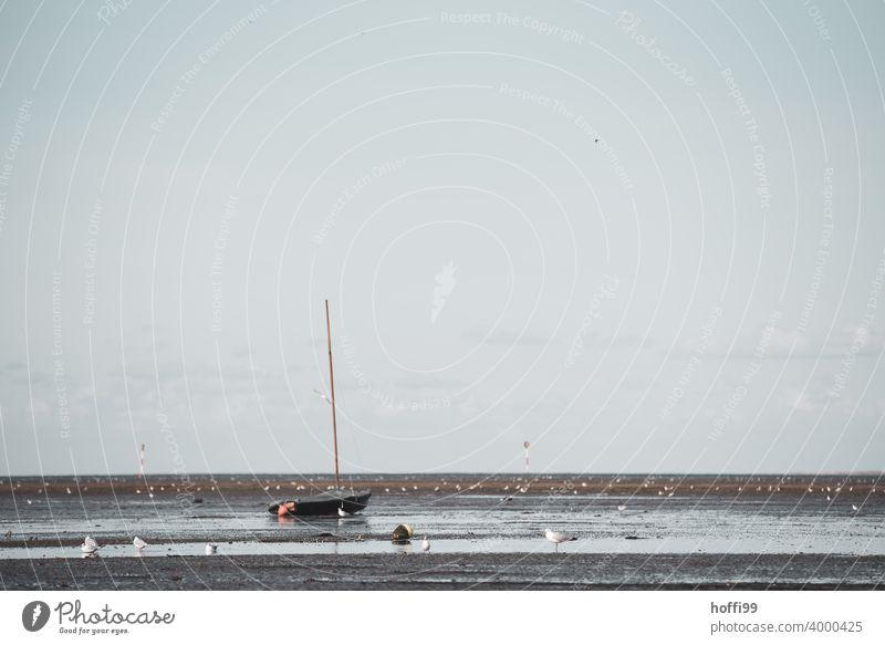 Das Segelboot liegt im Watt bei Ebbe auf Grund - die Flut wird kommen Möwe Wattenmeer auf Grund gelaufen Wasserfahrzeug Strand Sand Küste Nordsee Segeln Meer