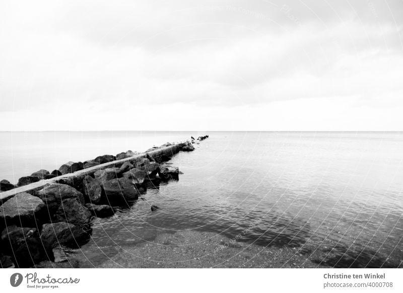 Eine Buhne aus Steinen an der Ostseeküste ragt weit hinaus ins Wasser. Sie schützt die Küste vor Wellen und Strömung. Am Ende der Buhne haben sich mehrere Kormorane versammelt