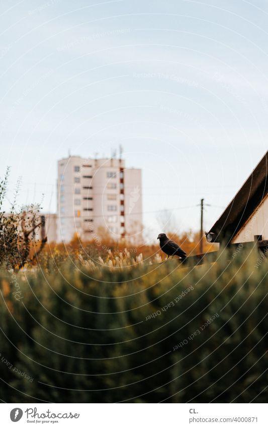im schrebergarten Schrebergarten Hecke Vogel Hochhaus Ruhrpott Himmel Abschreckung taubenschreck Vogelschreck Vogelabwehr Kleingartenkolonie Garten