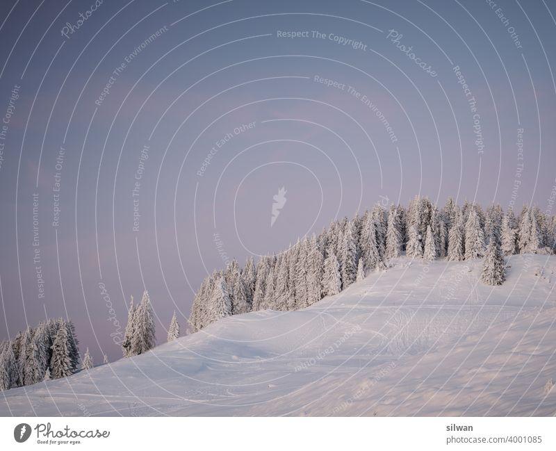 gefrorener Waldhügel Naturpark Gantrisch Schnee Winter kalt Felsen felsig winterlich gefrorener Boden Kälte Berge frozen Frost frostig Bäume Spuren Fußspuren