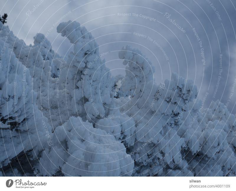 gefrorener Baum Schnee Winter kalt Ast Schneekristalle Eis