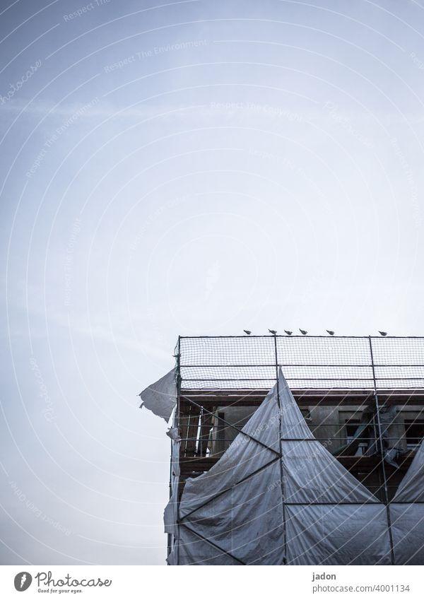 sitzgruppe. Gerüst Baustelle Möwe Plane Baugerüst Fassade Architektur Gebäude Sanieren Abdeckung Arbeit & Erwerbstätigkeit Strukturen & Formen Renovieren