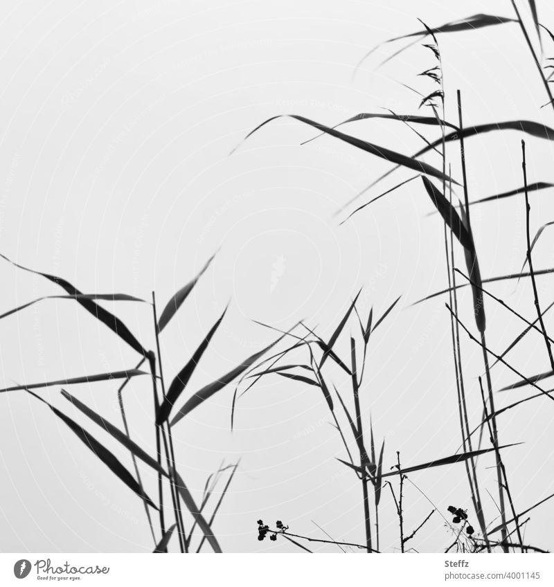 Seegras vor einem unsichtbaren See Schilfrohr Röhricht Gräser Seeufer reduziert nordisch hohes Gras achtsam Achtsamkeit minimalistisch heimische Wildpflanzen