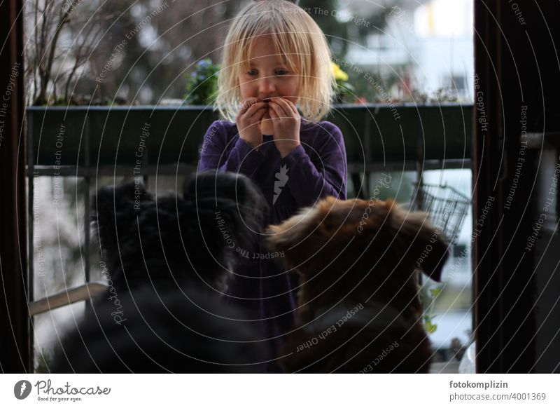 Kind kommuniziert mit zwei Hunden Mädchen Haushund Haustier Tierliebe Hundeliebe Kommunikation Freundschaft Mensch und Tier niedlich gemeinsam Zusammensein