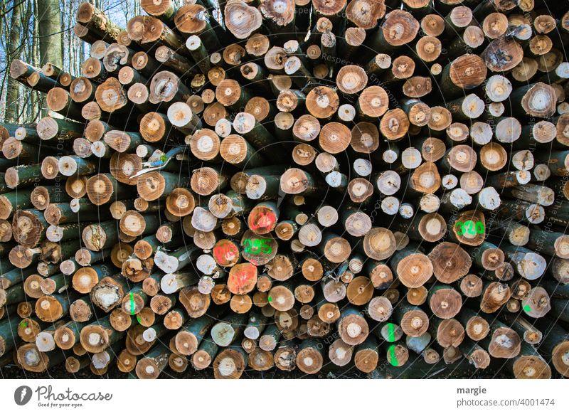 Ein Stapel gefällter Baumstämme. Viele sind bunt markiert. Baumstamm Holz Außenaufnahme Wald Umwelt Natur Menschenleer Tag Blick nach vorn