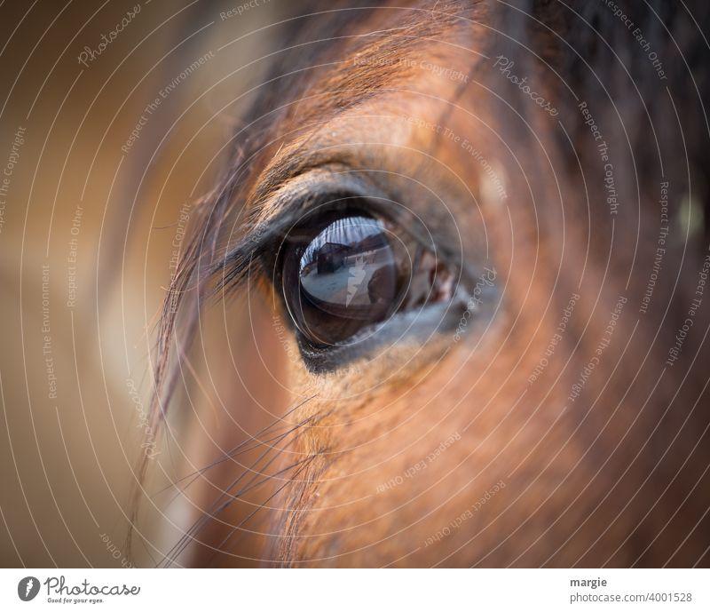 Das Auge eines Pferdes Tier Farbfoto Tierporträt braun Fell Nutztier Nahaufnahme Tieraugen Tierliebe tierisch Porträt wild Kopf Behaarung Tierwelt ländlich