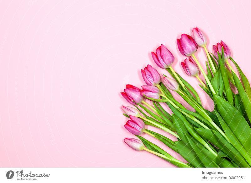 Tulpenstrauß auf rosa Pastellhintergrund. Wunderschöne Tulpen für  für Muttertag, Valentinstag, Geburtstag Grußkarte 14 null 8 Hintergrund Hintergründe