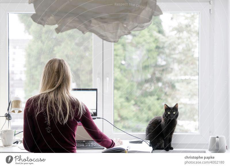 Frau im Home-Office mit Katze Homeoffice Home Office schwarz blond zuhause arbeiten Arbeit & Erwerbstätigkeit Arbeitsplatz Computer Innenaufnahme Laptop
