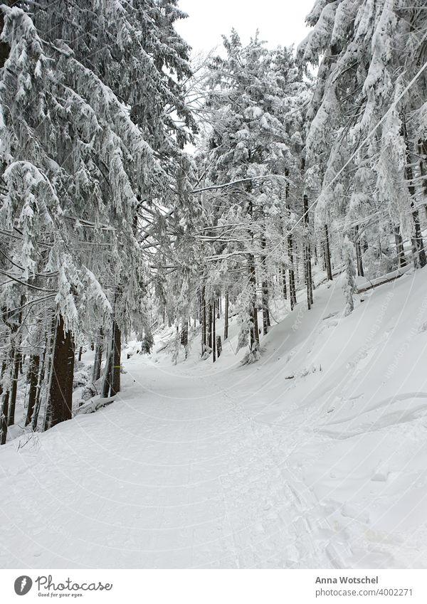 Winterwunderland im Schwarzwald Schnee, Wald Natur weiß Landschaft Schneelandschaft Winterstimmung Winterwald winterlich Kälte waldlandschaft Naturliebe