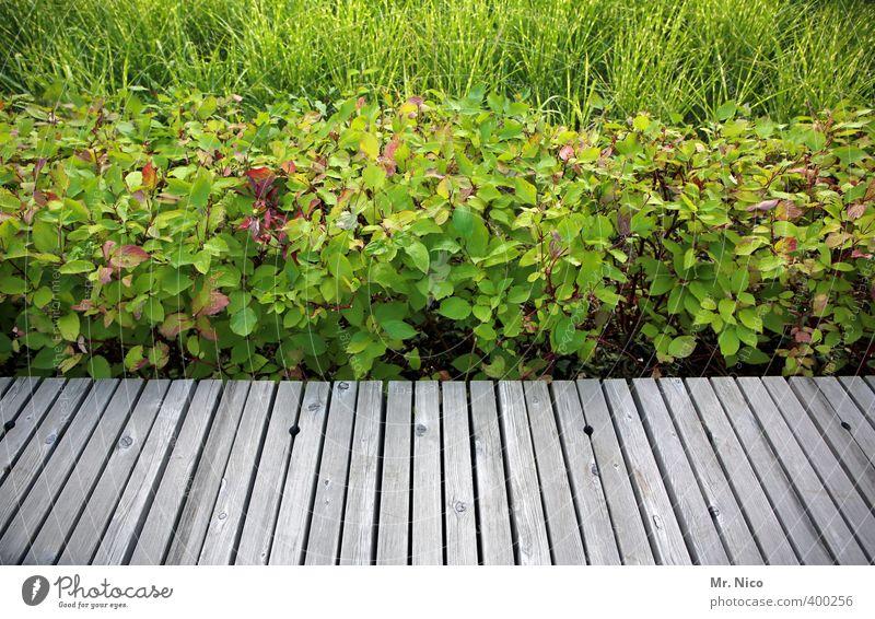 green mile Umwelt Natur Gras Sträucher Grünpflanze Garten Park grün Linie Steg Holzbrett Gräserblüte beschnitten Ordnung Wege & Pfade akkurat