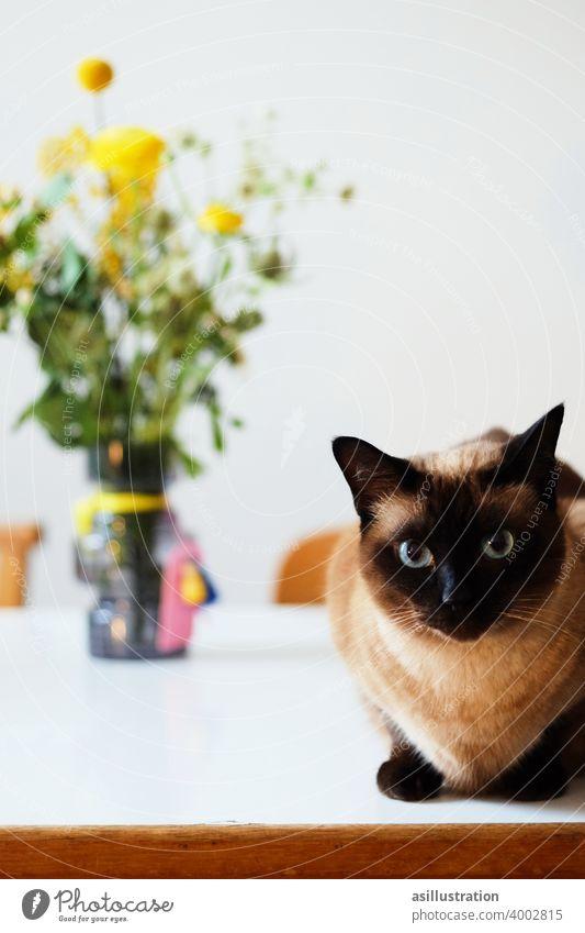 Siamkatze Katze Blumenstrauß Augen blaue augen schaumirindieaugen flauschig Haustier Esstisch frech Innenaufnahme Fell niedlich Tier Hauskatze Farbfoto