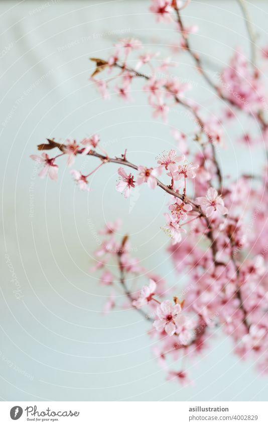Frühlingszweig Zweig rosa interior Dekoration Vase Blumenvase Blüte aufblühen zart schön Blühend Innenaufnahme schlicht Farbfoto Blütezeit Pflanze Lebensfreude