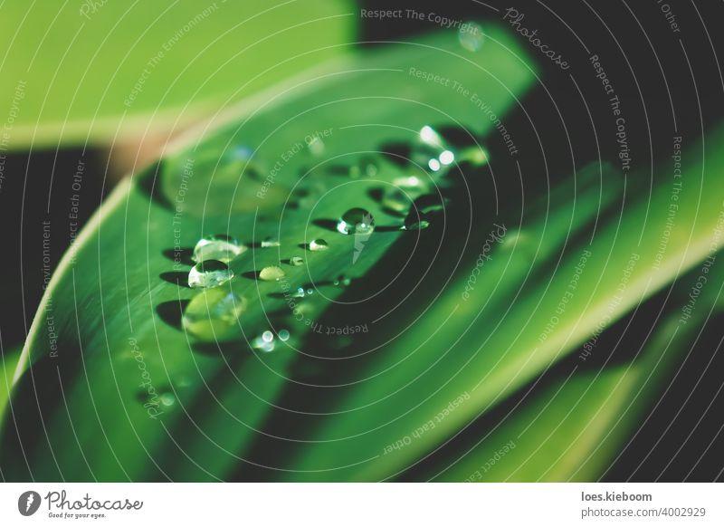 Detail der regen Tropfen auf sonnigen Blatt der Agave Pflanze Tröpfchen Wasser Regen Reinheit Nahaufnahme frisch Regentropfen grün Garten abstrakt Natur