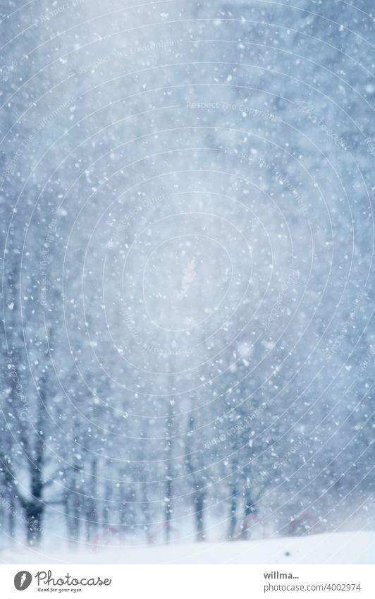 Schneegestöber Schneetreiben Schneefall Schneeflocken Winter Winterwald Winterstimmung Farbfoto schneien Außenaufnahme Wintertag winterlich Schneesturm