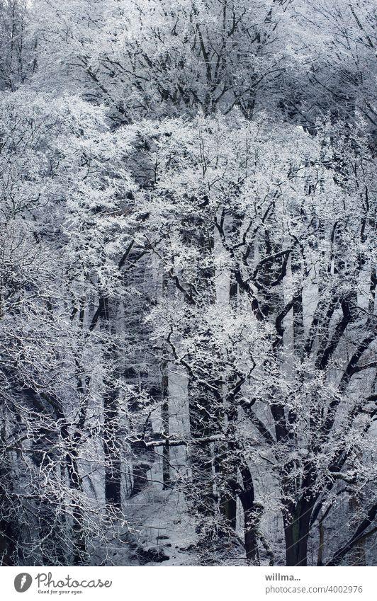 und es war winter ... Winter Bäume Wald verschneit Schnee winterlich Vogelperspektive Winterstimmung Winterwald Wintertag