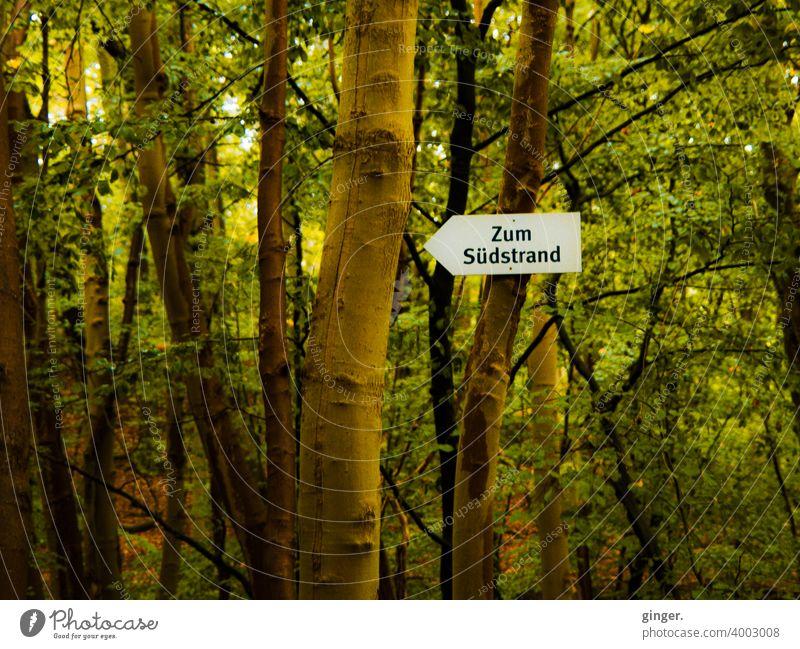 Zum Südstrand - Kleiner Wald auf Rügen, Ostseebad Sellin Wegweiser Pfeil Stämme Bäume Laubwerk Niederlassungen Befestigung Kontrast Natur Außenaufnahme Herbst