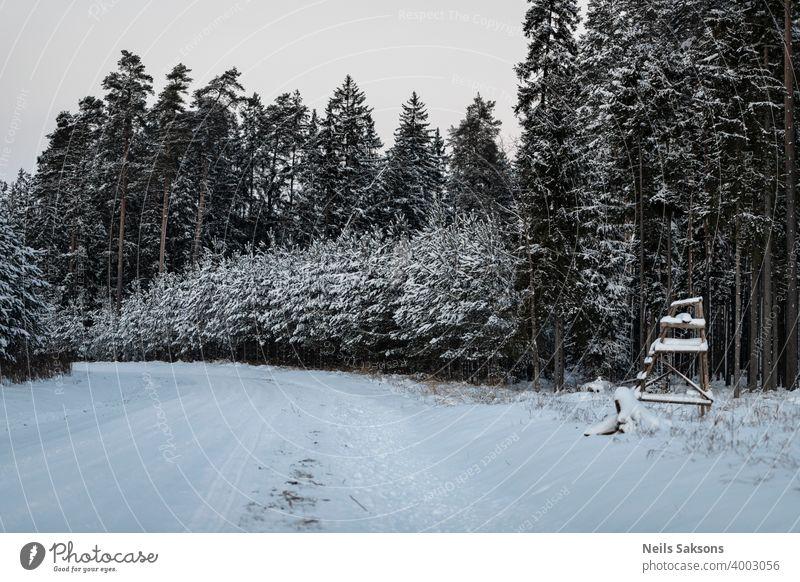 Winterwald im Schnee / Jägerturm nahe der Straße im Wald Baum kalt Landschaft Natur Berge u. Gebirge Bäume Himmel weiß Frost Ski Saison Kiefer verschneite blau