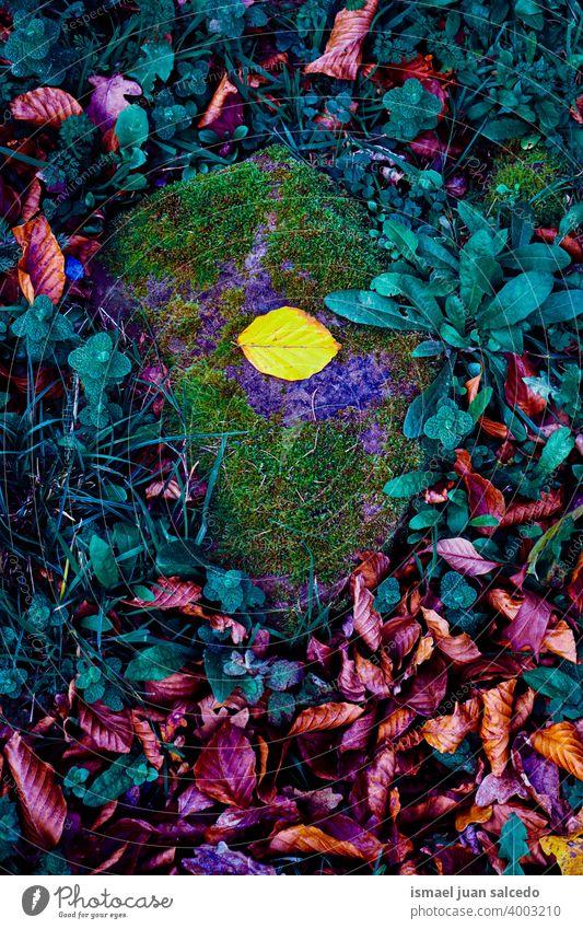 bunte Blätter auf dem Boden im Herbst Saison, Blatt gelb Farben farbenfroh mehrfarbig Hintergrund texturiert Herbststimmung Herbstlaub Herbstfarben trocknen