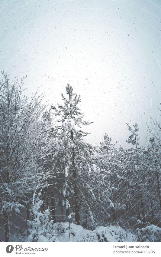 Schnee im Berg in der Wintersaison in Bilbao, Spanien Bäume Kiefer Schneefall Winterzeit kalt kalte Tage weiß Frost frostig gefroren Eis verschneite
