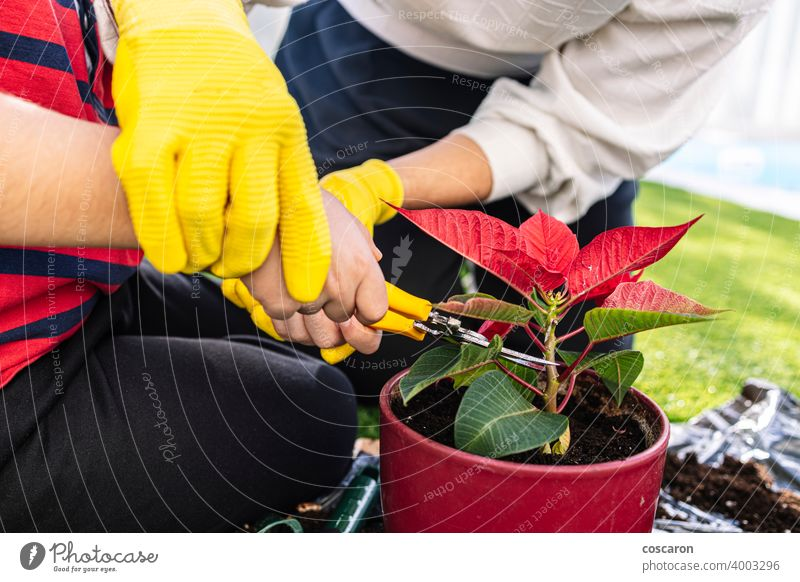 Mutter und Sohn im Garten beim Pflanzen von Blumen. Erste Ansicht. Ackerbau Hintergrund Transparente Botanik Pflege Kind Kindheit Bodenbearbeitung Schneiden