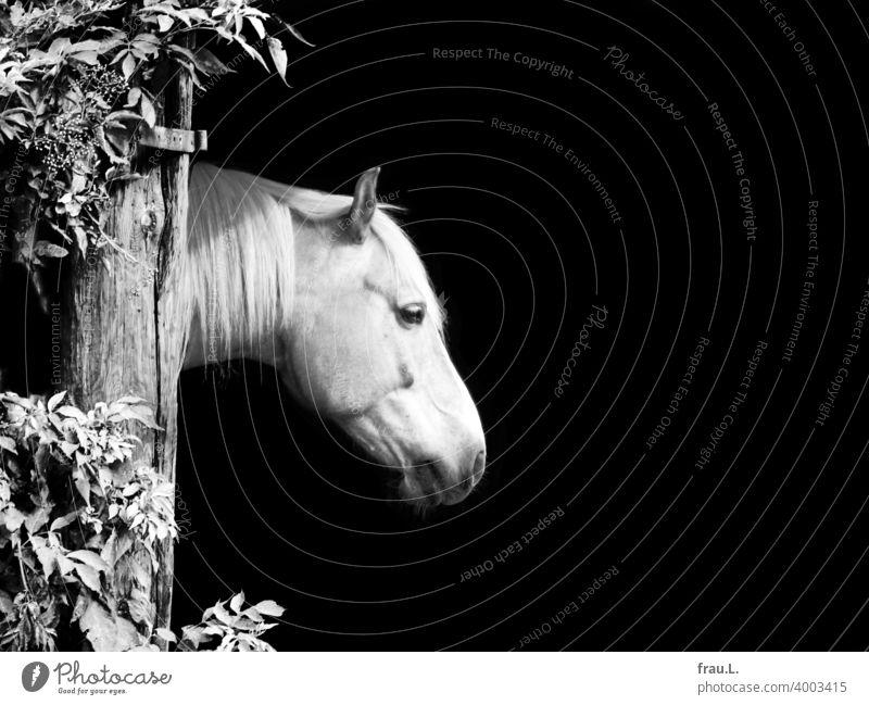 Ein Pferd Tier Tag Tierporträt Bauernhof Kopf