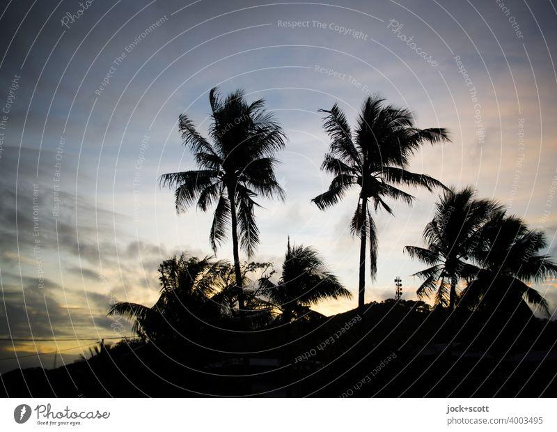 Abendstunde mit Palmen Himmel Sonnenlicht exotisch Klischee Romantik Urlaubsfoto Kitsch Abenddämmerung Warmes Licht Paradies Silhouette tropisch Sonnenuntergang