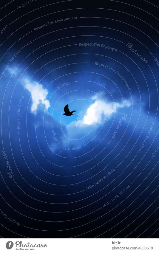 Schlupfloch l kleiner Vogel, flieg nach helgiland... Krähe Rabenvögel Wolken Wolkenhimmel Wolkendecke wolkig Wolkenformation Bewegung bewölkt bewölkter himmel