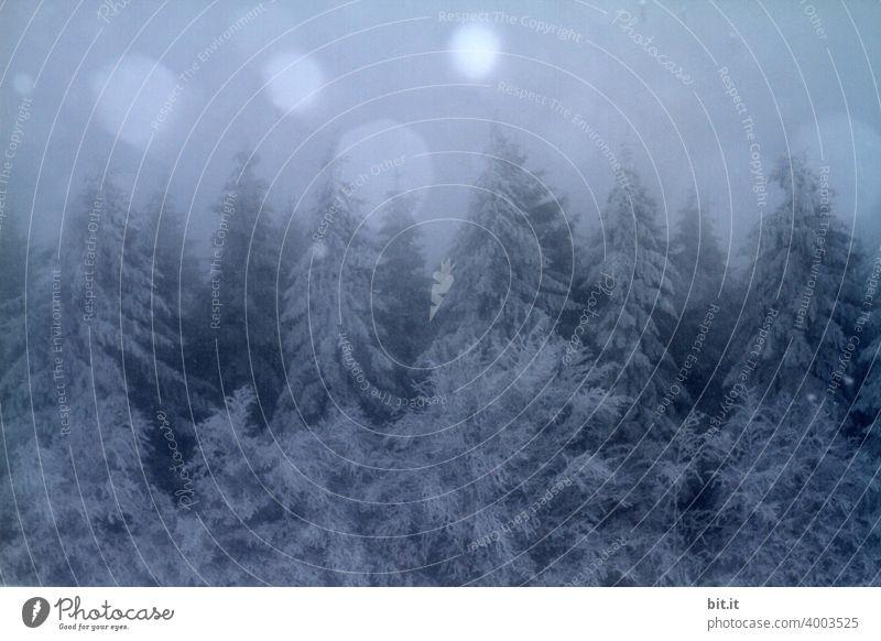 Sonne, Mond und Winterwald Schnee Baum kalt Himmel Eis Frost blau Natur Wald Landschaft schön Umwelt Klima Wetter weiß ruhig Winterstimmung Schneelandschaft